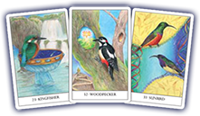 Each pack contains 55 Beautiful Bird Cards plus an 80-page booklet.