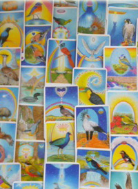 Bird Cards Second Set